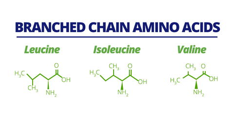 chemical breakdown of 3 branch chain amino acids